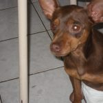 A linda e emocionante história do cãozinho Lucas