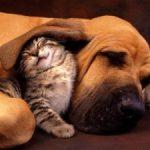 Dia Internacional do Combate as injustiças!!! Vale também para os nossos queridos PETs!