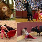 Outubro – Mês dos Animais!