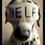 Maus-tratos aos animais: SBT Vídeos