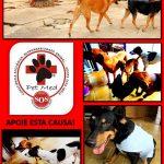 Responsabilidade Animal – Nova Campanha da PET MED com matéria exclusiva com a Sra. Neusa, uma protetora de animais.