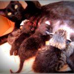 Vida Animal – Uma luta emocionante para viver! Esta é a história de Foliska!