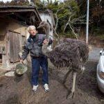 Naoto Matsumura: O Herói dos animais em Fukushima