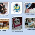 Quem será a(o) nossa(o) Super Pet? A Pet Med escolheu as 5 melhores e agora o público decide.