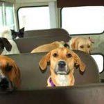 Cães e Gatos nos meios de transportes públicos!