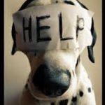 Pet Med News: Animais podem ser resgatados de maus-tratos sem mandado judicial