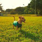 A tecnologia nas roupas Pet Med