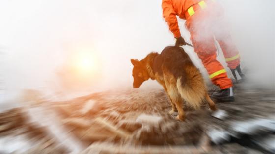 Cães farejadores e equipes de resgate: nossa sincera homenagem!