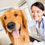 Nova resolução do Conselho Federal de Medicina Veterinária altera regras para estabelecimentos veterinários