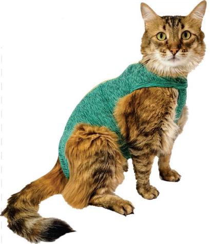 gato-duodry