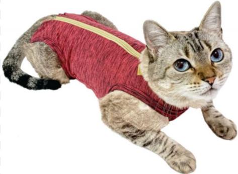 gato-duodry2