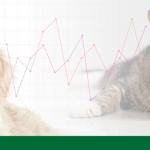 Entrevista com o Instituto Pet Brasil