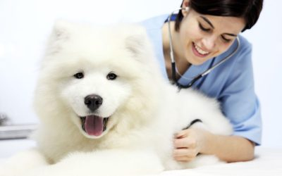 Novembro Azul: como prevenir, diagnosticar e tratar o câncer de próstata nos pets