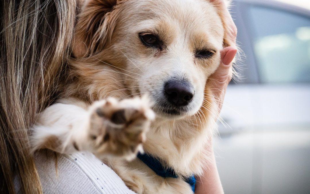 Como ser voluntária nos Projetos de responsabilidade animal mudou minha vida